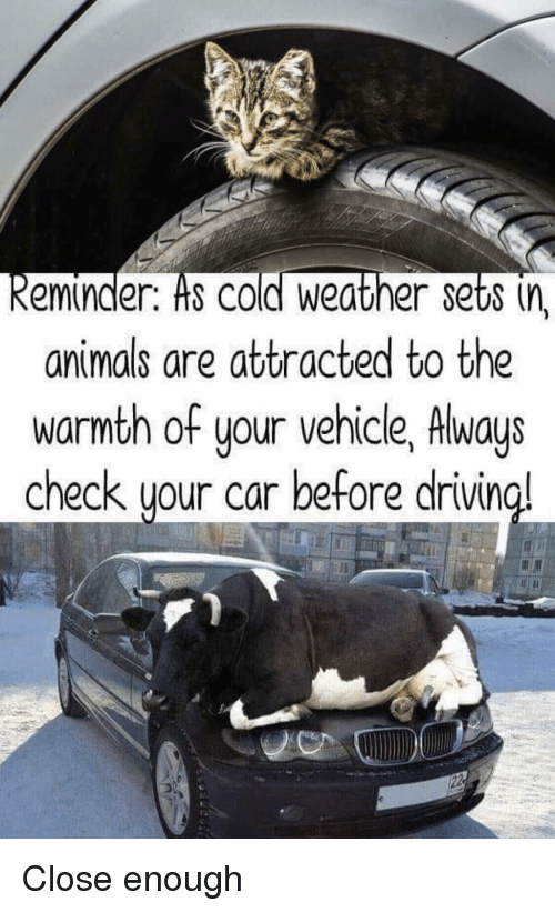 Animals, Weather, and Cold: eminder. Hs COld Weather sets (n  animals are attracted to the  warmth of your vehicle, Always  check uour car before drivin  a! Close enough