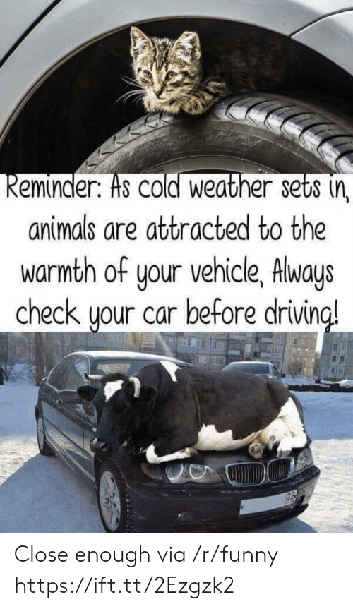 Animals, Funny, and Weather: eminder. Hs COld Weather sets (n  animals are attracted to the  warmth of your vehicle, Always  check uour car before drivin  a! Close enough via /r/funny https://ift.tt/2Ezgzk2
