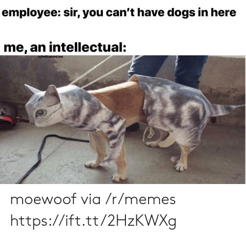 Dogs, Memes, and Via: employee: sir, you can't have dogs in here  me, an intellectual:  conLionn moewoof via /r/memes https://ift.tt/2HzKWXg