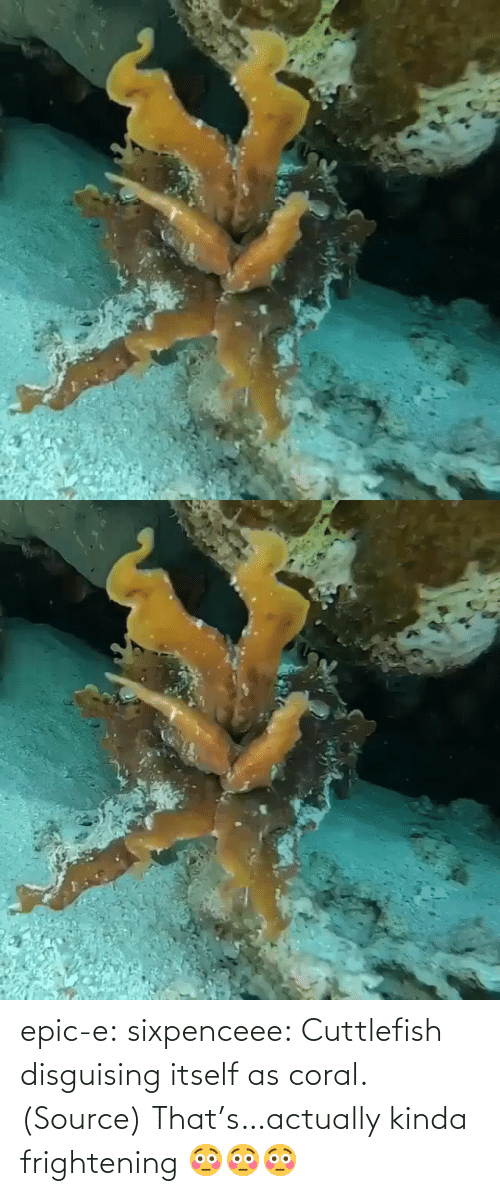 source: epic-e: sixpenceee:  Cuttlefish disguising itself as coral. (Source)  That's…actually kinda frightening 😳😳😳