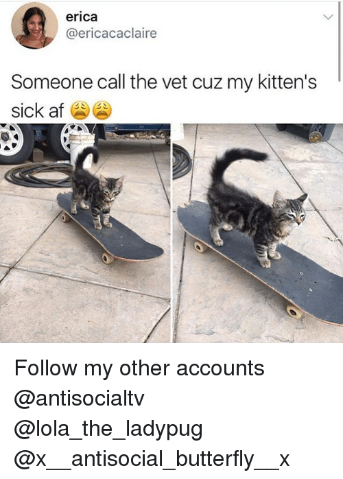 lolas: erica  @ericacaclaire  Someone call the vet cuz my kitten's  sick af Follow my other accounts @antisocialtv @lola_the_ladypug @x__antisocial_butterfly__x
