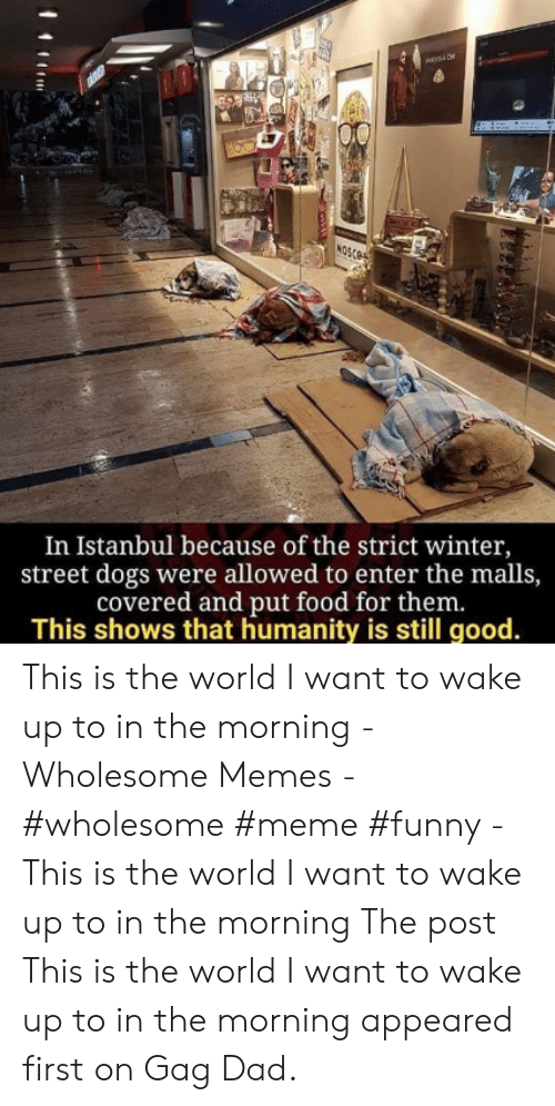 Memes Wholesome: es  NOSCO  In Istanbul because of the strict winter,  street dogs were allowed to enter the malls,  covered and put food for them.  This shows that humanity is still good. This is the world I want to wake up to in the morning - Wholesome Memes - #wholesome #meme #funny - This is the world I want to wake up to in the morning The post This is the world I want to wake up to in the morning appeared first on Gag Dad.