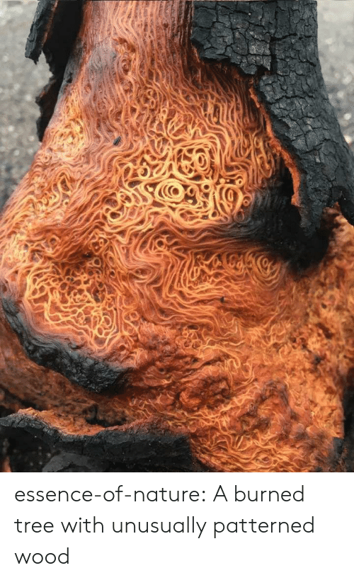 Tumblr, Blog, and Nature: essence-of-nature:   A burned tree with unusually patterned wood