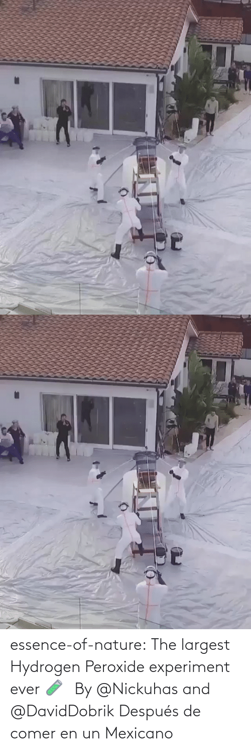 comer: essence-of-nature:    The largest Hydrogen Peroxide experiment ever 🧪⠀By @Nickuhas and @DavidDobrik     Después de comer en un Mexicano