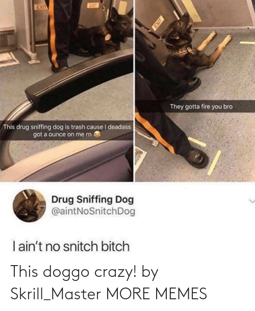 Bitch, Crazy, and Dank: EUT  EXIT  They gotta fire you bro  This drug sniffing dog is trash cause I deadass  got a ounce on me rn  Drug Sniffing Dog  @aintNoSnitchDog  I ain't no snitch bitch This doggo crazy! by Skrill_Master MORE MEMES