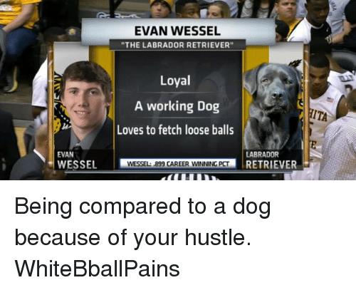 """Basketball, Dogs, and Love: EVAN WESSEL  """"THE LABRADOR RETRIEVER""""  Loyal  A working Dog  TITA  Loves to fetch loose balls  EVAN  LABRADOR  WESSEL  WESSEL: 899 CAREER WNNING PCT  RETRIEVER Being compared to a dog because of your hustle. WhiteBballPains"""