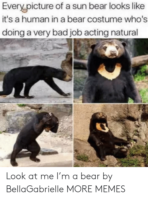 Bad, Dank, and Memes: Every,picture of a sun bear looks like  it's a human in a bear costume who's  doing a very bad job acting natural Look at me I'm a bear by BellaGabrielle MORE MEMES