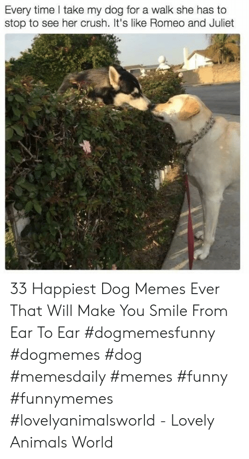 juliet: Every time take my dog for a walk she has to  stop to see her crush. t's like Romeo and Juliet 33 Happiest Dog Memes Ever That Will Make You Smile From Ear To Ear #dogmemesfunny #dogmemes #dog #memesdaily #memes #funny #funnymemes #lovelyanimalsworld - Lovely Animals World