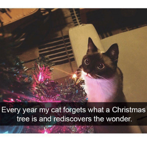 Christmas, Christmas Tree, and Tree: Every year my cat forgets what a Christmas  tree is and rediscovers the wonder