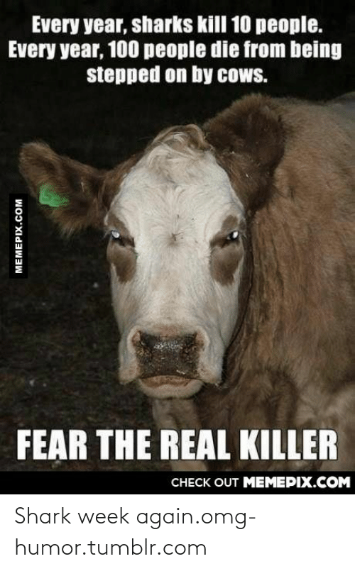 100 People: Every year, sharks kill 10 people.  Every year, 100 people die from being  stepped on by cows.  FEAR THE REAL KILLER  CHECK OUT MEMEPIX.COM  MEMEPIX.COM Shark week again.omg-humor.tumblr.com