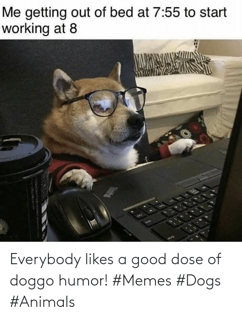 Dogs: Everybody likes a good dose of doggo humor! #Memes #Dogs #Animals