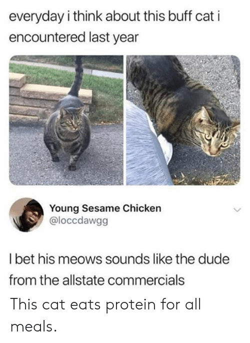 Dank, I Bet, and Protein: everyday i think about this buff cat i  encountered last year  Young Sesame Chicken  @loccdawgg  I bet his meows sounds like the dudee  from the allstate commercials This cat eats protein for all meals.