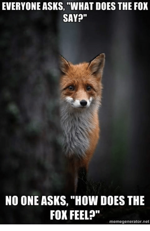 """The Fox Say: EVERYONE ASKS, """"WHAT DOES THE FOX  SAY?""""  NO ONE ASKS, """"How DOES THE  FOX FEEL?""""  memegenerator.net"""