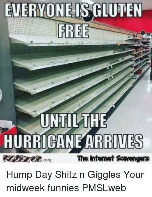Hump Day: EVERYONE IS GLUTEN  FREE  UNTILTHE  HURRICANE ARRIVES  The ntemet Scavengers <p>Hump Day Shitz n Giggles  Your midweek funnies  PMSLweb </p>