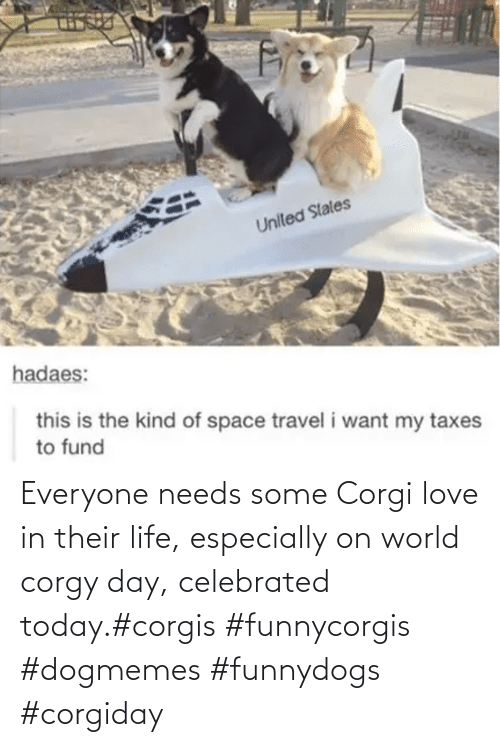 Corgis: Everyone needs some Corgi love in their life, especially on world corgy day, celebrated today.#corgis #funnycorgis #dogmemes #funnydogs #corgiday
