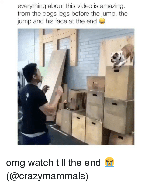 Dogs, Memes, and Omg: everything about this video is amazing  from the dogs legs before the jump, the  jump and his face at the end omg watch till the end 😭 (@crazymammals)