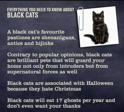 Cats, Christmas, and Halloween: EVERYTHING YOU NEED TO KNOW ABOUT  BLACK CATS  o 0  A black cat's favourite  pastimes are shenanigans,  antics and hijinks  Contrary to popular opinions, black cats  are brilliant pets that will guard your  home not only from intruders but from  supernatural forces as well  Black cats are associated with Halloween  because they hate Christmas  Black cats will eat 17 ghosts per year and  don't even want your thanks