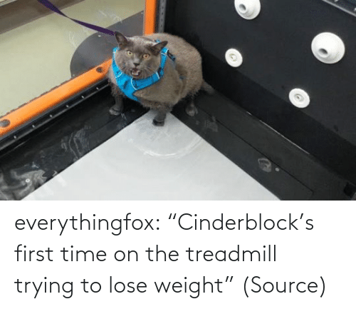 """First Time: everythingfox: """"Cinderblock's first time on the treadmill trying to lose weight"""" (Source)"""