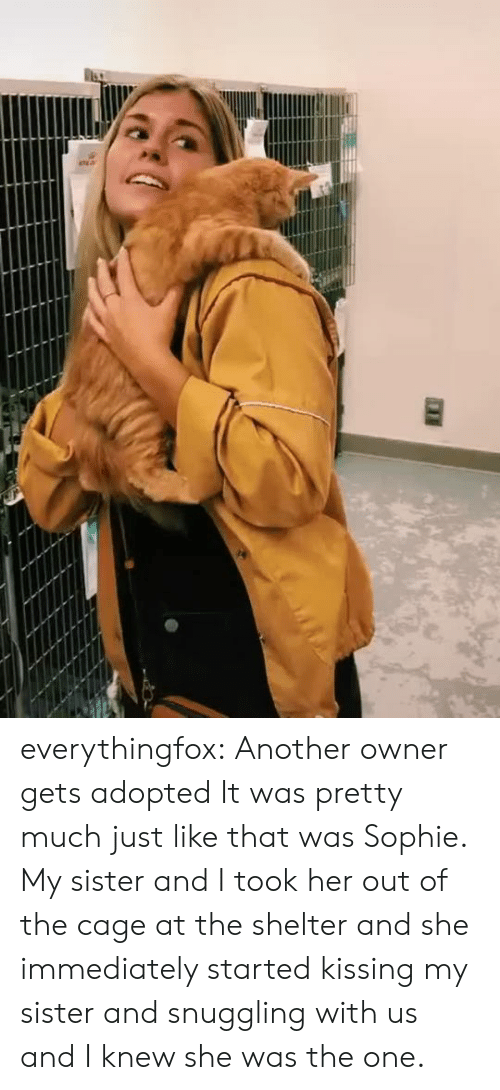 Imgur: everythingfox:   Another owner gets adopted  It was pretty much just like that was Sophie. My sister and I took her out of the cage at the shelter and she immediately started kissing my sister and snuggling with us and I knew she was the one.