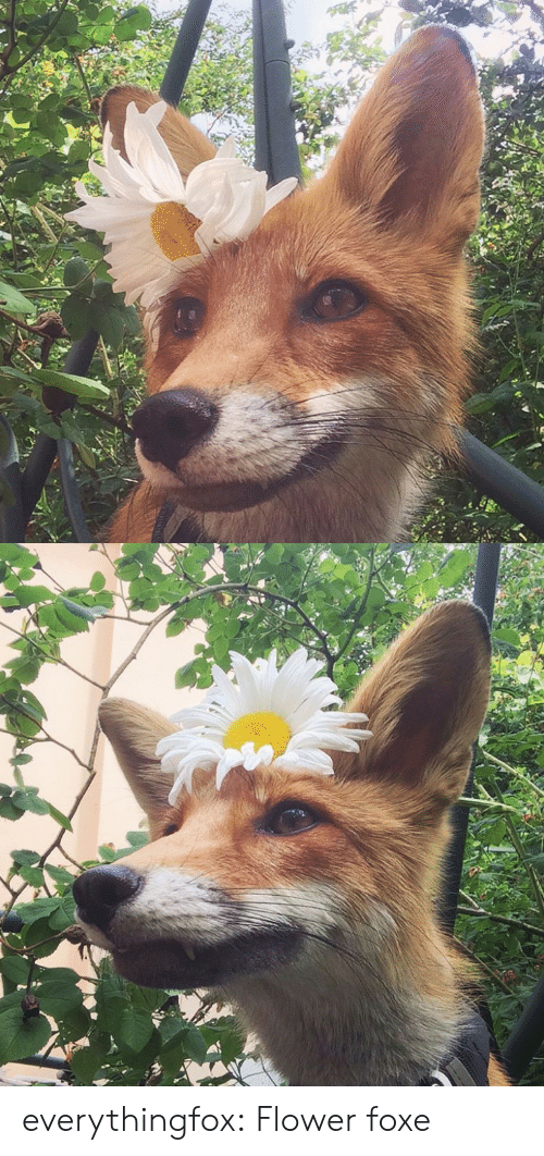 Foxe: everythingfox:  Flower foxe