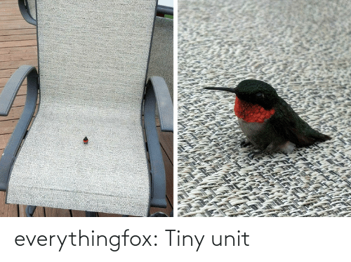 tiny: everythingfox:  Tiny unit