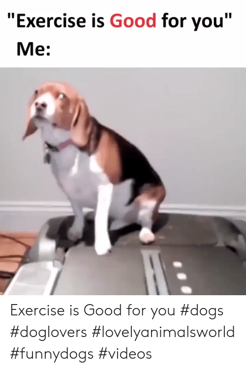 "Dogs, Good for You, and Videos: ""Exercise is Good for you""  Me: Exercise is Good for you #dogs #doglovers #lovelyanimalsworld #funnydogs #videos"
