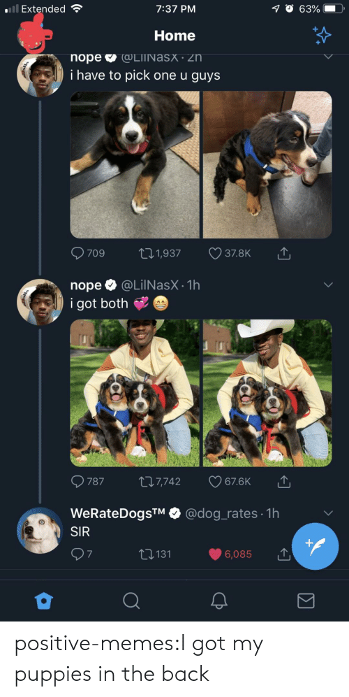 Memes, Puppies, and Tumblr: Extended  7:37 PM  Home  i have to pick one u guys  nope @LilNasX.1h  i got both  787 t 7,742 67.6K  WeRateDogsTM @dog_rates 1h  SIR  6,085  t131  7 positive-memes:I got my puppies in the back