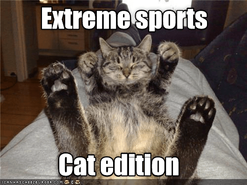 extreme: Extreme sports  Cat edition  ICANHASCHEE2BURGER cOM