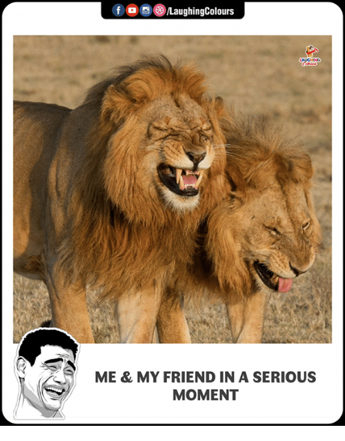 Indianpeoplefacebook, Friend, and Moment: f , 9 )/LaughingColours  ME & MY FRIEND IN A SERIOUS  MOMENT