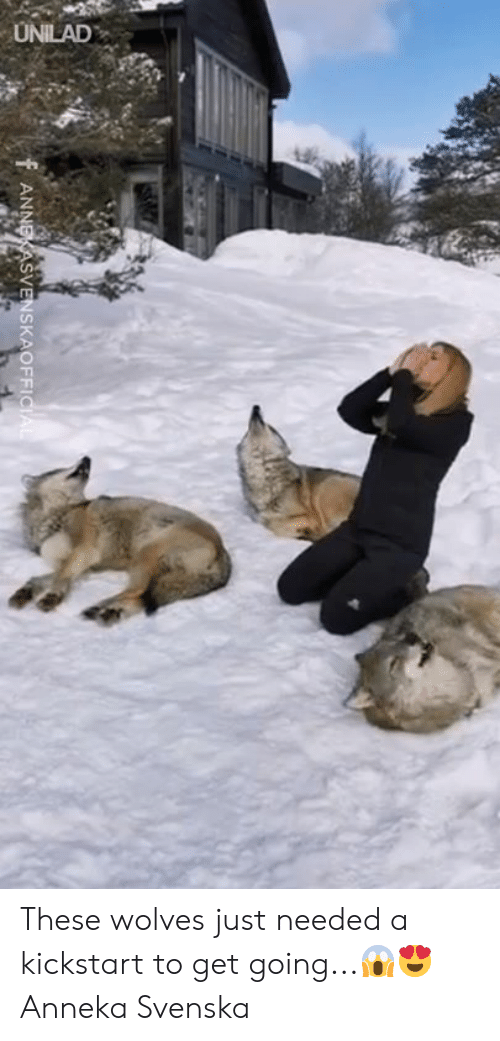 Dank, Wolves, and 🤖: F ANNE ASVENSKAOFFI These wolves just needed a kickstart to get going...😱😍  Anneka Svenska
