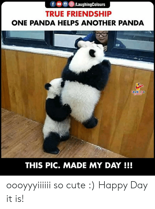 Panda: f /LaughingColours  TRUE FRIENDSHIP  ONE PANDA HELPS ANOTHER PANDA  LAUGHING  Clers  THIS PIC. MADE MY DAY !!! oooyyyiiiiii so cute :) Happy Day it is!