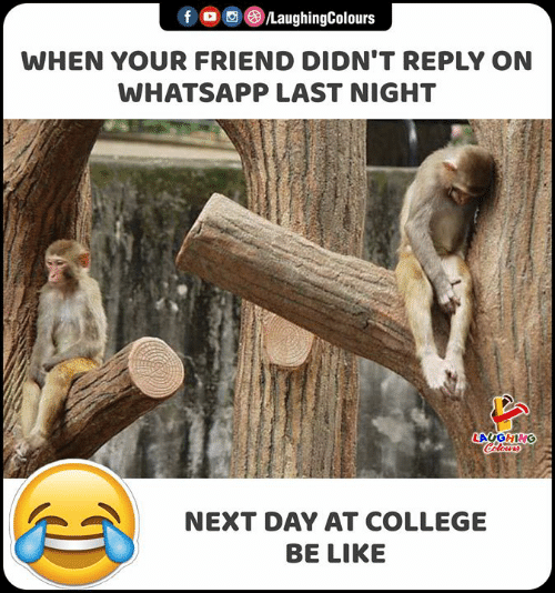 Be Like, College, and Whatsapp: f /LaughingColours  WHEN YOUR FRIEND DIDN'T REPLY ON  WHATSAPP LAST NIGHT  LAUGHING  Celours  NEXT DAY AT COLLEGE  BE LIKE
