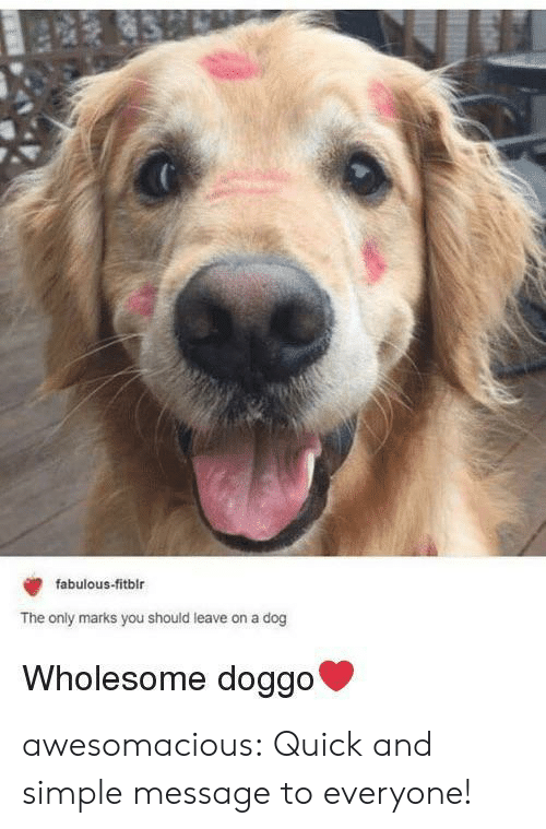 Tumblr, Blog, and Wholesome: fabulous-fitblr  The only marks you should leave on a dog  Wholesome doggo' awesomacious:  Quick and simple message to everyone!