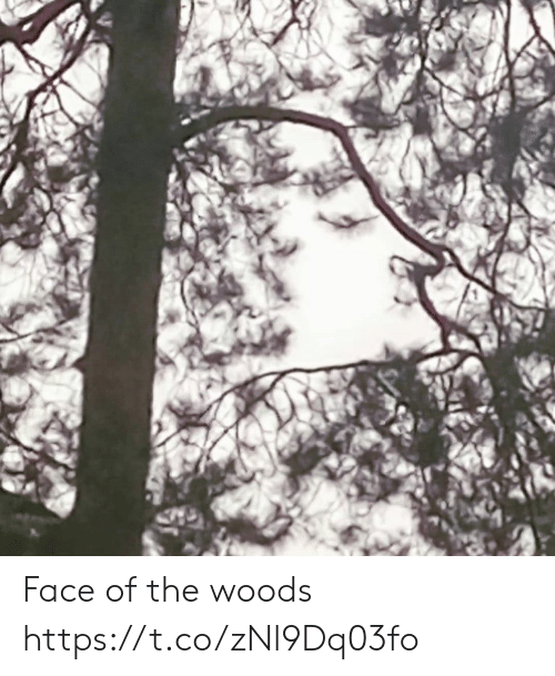 Faces-In-Things, Face, and Woods: Face of the woods https://t.co/zNl9Dq03fo