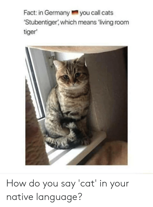 Cats, Memes, and Tiger: Fact: in Germanyyou call cats  Stubentiger, which means 'living room  tiger How do you say 'cat' in your native language?