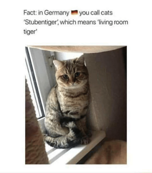 Cats, Tiger, and Living: Fact: in Germanyyou call cats  Stubentiger, which means 'living room  tiger