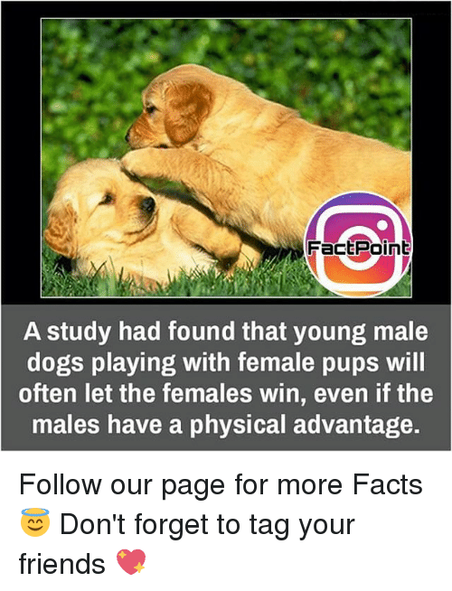 Femal: Fact Point  A study had found that young male  dogs playing with female pups will  often let the females win, even if the  males have a physical advantage. Follow our page for more Facts 😇 Don't forget to tag your friends 💖
