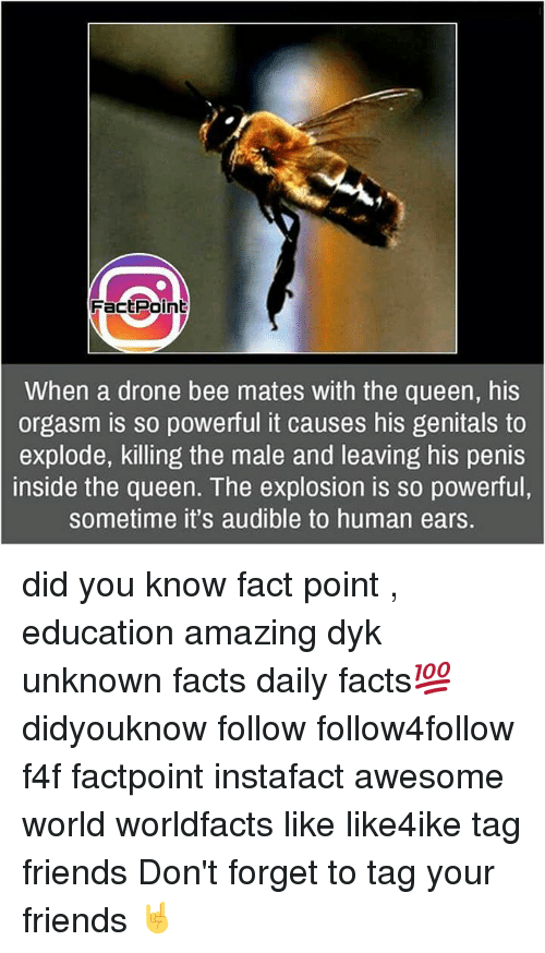 Penies: Fact Point  When a drone bee mates with the queen, his  orgasm is so powerful it causes his genitals to  explode, killing the male and leaving his penis  inside the queen. The explosion is so powerful,  sometime it's audible to human ears. did you know fact point , education amazing dyk unknown facts daily facts💯 didyouknow follow follow4follow f4f factpoint instafact awesome world worldfacts like like4ike tag friends Don't forget to tag your friends 🤘