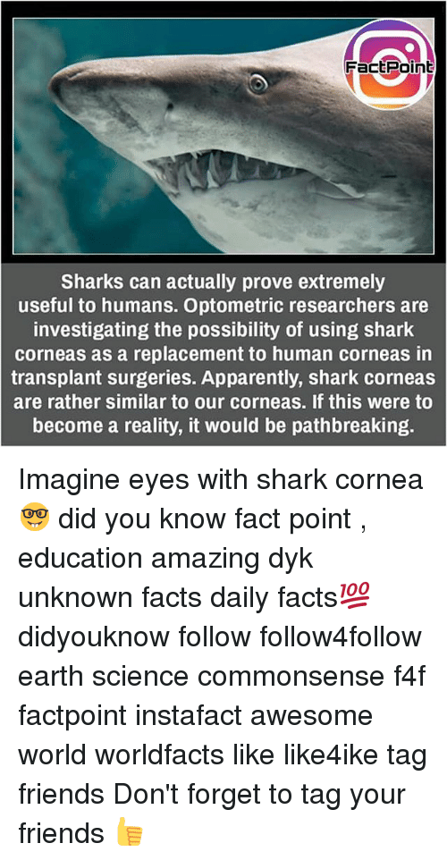 sharking: FactPoint  Sharks can actually prove extremely  useful to humans. Optometric researchers are  investigating the possibility of using shark  corneas as a replacement to human corneas in  transplant surgeries. Apparently, shark corneas  are rather similar to our corneas. If this were to  become a reality, it would be pathbreaking Imagine eyes with shark cornea 🤓 did you know fact point , education amazing dyk unknown facts daily facts💯 didyouknow follow follow4follow earth science commonsense f4f factpoint instafact awesome world worldfacts like like4ike tag friends Don't forget to tag your friends 👍