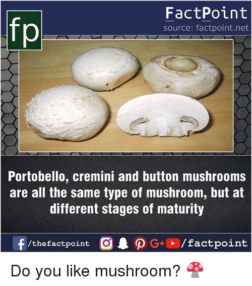 Memes, All The, and 🤖: FactPoint  source: factpoint.net  Portobello, cremini and button mushrooms  are all the same type of mushroom, but at  different stages of maturity Do you like mushroom? 🍄