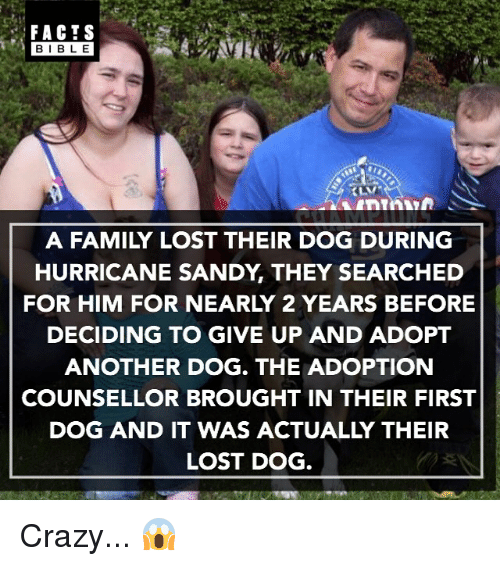 Crazy, Facts, and Family: FACTS  BIBLE  A FAMILY LOST THEIR DOG DURING  HURRICANE SANDY THEY SEARCHED  FOR HIM FOR NEARLY 2 YEARS BEFORE  DECIDING TO GIVE UP AND ADOPT  ANOTHER DOG. THE ADOPTION  COUNSELLOR BROUGHT IN THEIR FIRST  DOG AND IT WAS ACTUALLY THEIR  LOST DOG Crazy... 😱