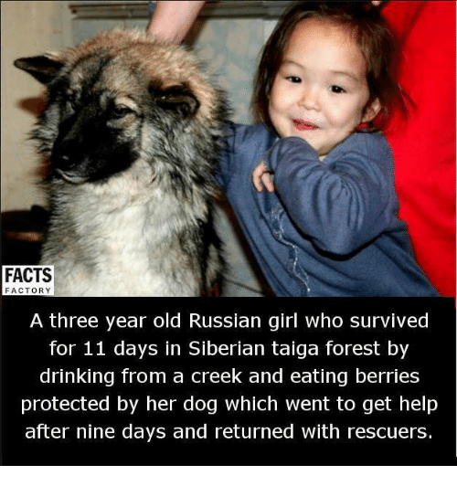 Memes, 🤖, and Forest: FACTS  FACTORY  A three year old Russian girl who survived  for 11 days in Siberian taiga forest by  drinking from a creek and eating berries  protected by her dog which went to get help  after nine days and returned with rescuers