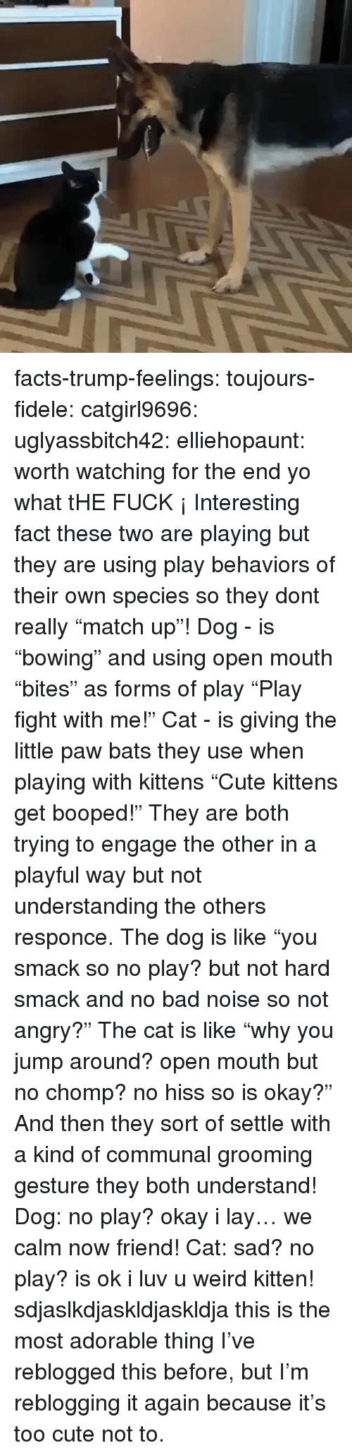 "playful: facts-trump-feelings:  toujours-fidele:  catgirl9696:  uglyassbitch42:  elliehopaunt: worth watching for the end  yo what tHE FUCK ¡   Interesting fact these two are playing but they are using play behaviors of their own species so they dont really ""match up""! Dog - is ""bowing"" and using open mouth ""bites"" as forms of play  ""Play fight with me!"" Cat - is giving the little paw bats they use when playing with kittens ""Cute kittens get booped!"" They are both trying to engage the other in a playful way but not understanding the others responce. The dog is like ""you smack so no play? but not hard smack and no bad noise so not angry?"" The cat is like ""why you jump around? open mouth but no chomp? no hiss so is okay?"" And then they sort of settle with a kind of communal grooming gesture they both understand! Dog: no play? okay i lay… we calm now friend! Cat: sad? no play? is ok i luv u weird kitten!   sdjaslkdjaskldjaskldja this is the most adorable thing  I've reblogged this before, but I'm reblogging it again because it's too cute not to."