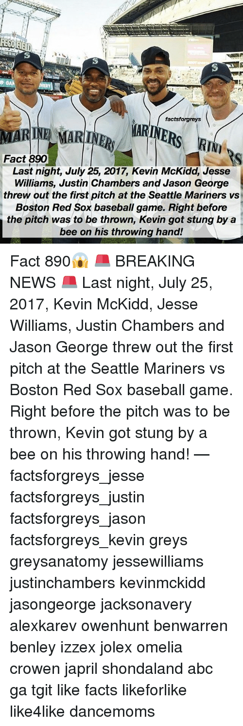 Abc, Baseball, and Facts: factsforgreys  MARINE MARINR ARINE  Fact 890  Last night, July 25, 2017, Kevin McKidd, Jesse  Williams, Justin Chambers and Jason George  threw out the first pitch at the Seattle Mariners vs  Boston Red Sox baseball game. Right before  the pitch was to be thrown, Kevin got stung by a  bee on his throwing hand! Fact 890😱 🚨 BREAKING NEWS 🚨 Last night, July 25, 2017, Kevin McKidd, Jesse Williams, Justin Chambers and Jason George threw out the first pitch at the Seattle Mariners vs Boston Red Sox baseball game. Right before the pitch was to be thrown, Kevin got stung by a bee on his throwing hand! — factsforgreys_jesse factsforgreys_justin factsforgreys_jason factsforgreys_kevin greys greysanatomy jessewilliams justinchambers kevinmckidd jasongeorge jacksonavery alexkarev owenhunt benwarren benley izzex jolex omelia crowen japril shondaland abc ga tgit like facts likeforlike like4like dancemoms