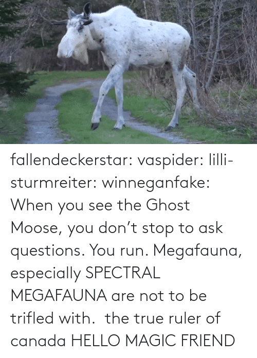 Especially: fallendeckerstar: vaspider:  lilli-sturmreiter:  winneganfake: When you see the Ghost Moose, you don't stop to ask questions. You run. Megafauna, especially SPECTRAL MEGAFAUNA are not to be trifled with.  the true ruler of canada  HELLO MAGIC FRIEND