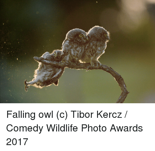 Comedy, Owl, and Photo