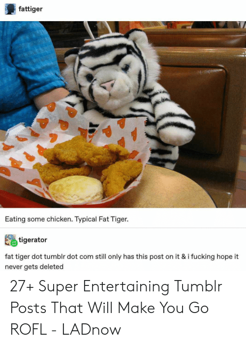 entertaining: fattiger  Eating some chicken. Typical Fat Tiger.  tigerator  fat tiger dot tumblr dot com still only has this post on it & i fucking hope it  never gets deleted 27+ Super Entertaining Tumblr Posts That Will Make You Go ROFL - LADnow
