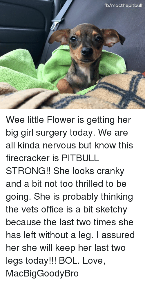 assuring: fb/macthepitbull Wee little Flower is getting her big girl surgery today. We are all kinda nervous but know this firecracker is PITBULL STRONG!! She looks cranky and a bit not too thrilled to be going. She is probably thinking the vets office is a bit sketchy because the last two times she has left without a leg. I assured her she will keep her last two legs today!!! BOL.   Love, MacBigGoodyBro