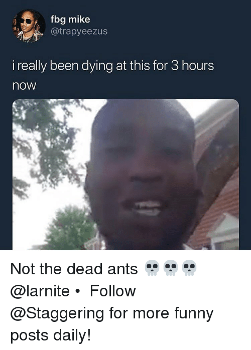 Fbg: fbg mike  . @trapyeezus  i really been dying at this for 3 hours  now Not the dead ants 💀💀💀 @larnite • ➫➫➫ Follow @Staggering for more funny posts daily!
