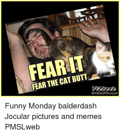 Fear It: FEAR IT  FEAR THE CAT BUTT <p>Funny Monday balderdash  Jocular pictures and memes  PMSLweb </p>